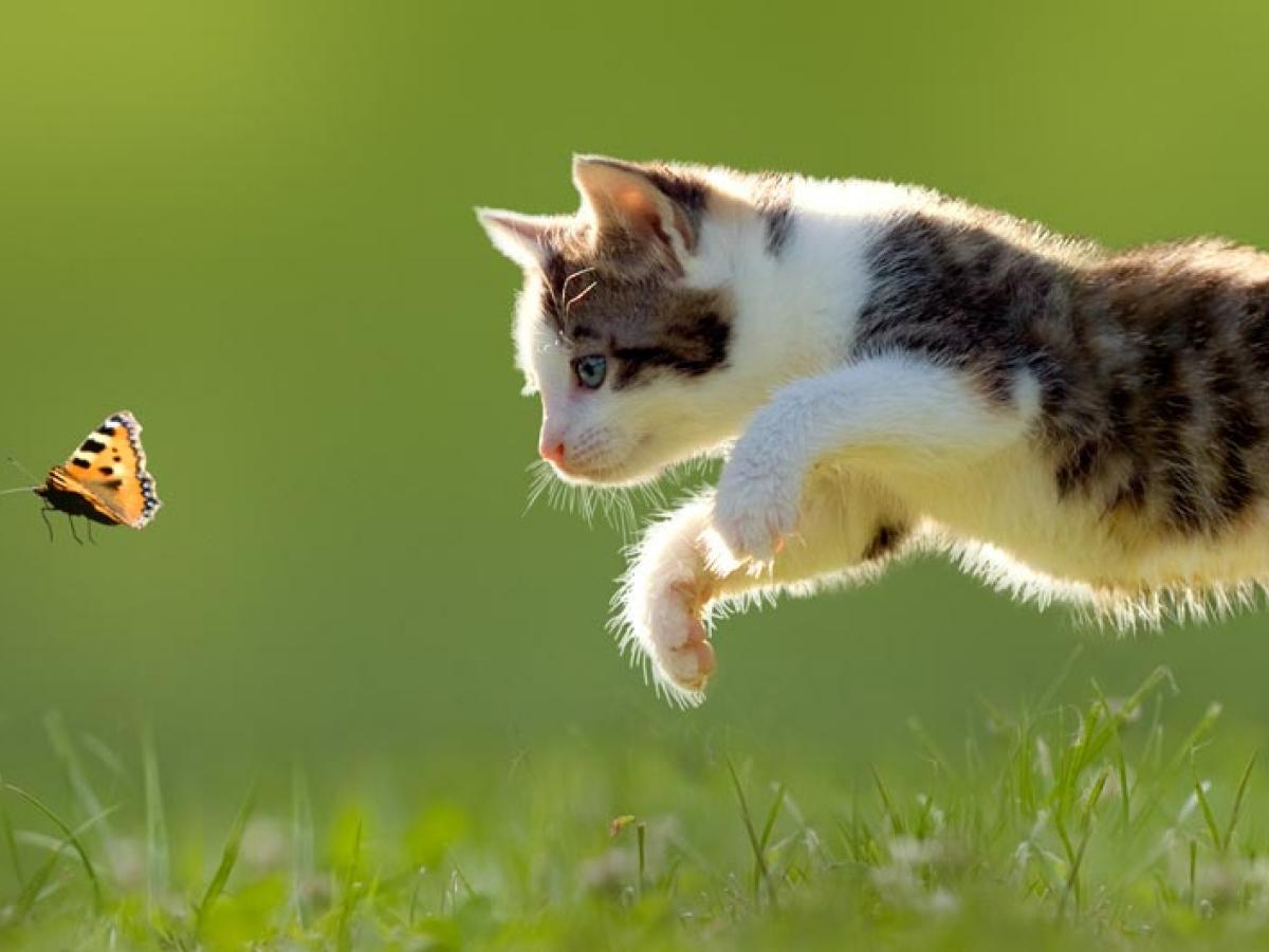 Checklist Voor Een Gelukkige Kat Dap De Leieband